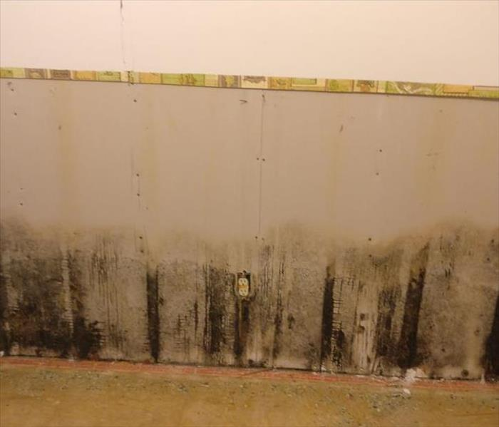 Mold Remediation Does your insurance policy cover Mold?